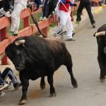 Gahirupe Toro Calle (2)