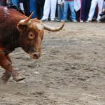 Gahirupe Toro Calle (5)