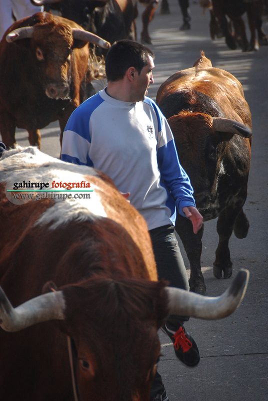 Gahirupe-encierro-valdemorillo-2011