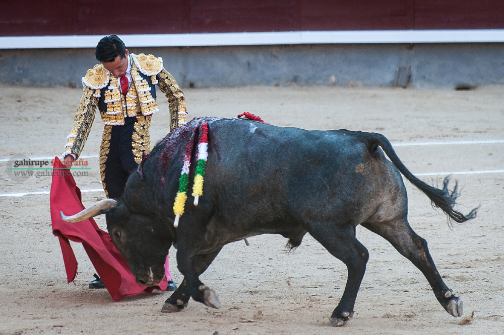 Gahirupe Diego Urdiales 2015 (5)