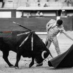 Gahirupe Gallo de Cordoba 2016 (5)
