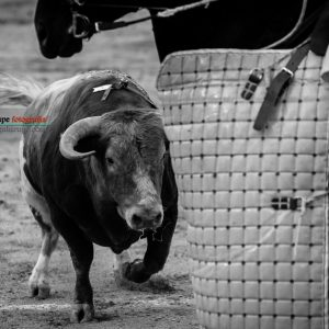 gahirupe_detalles_madrid_2017- (5)