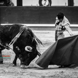 gahirupe_morenito_de_aranda_ventorrillo_2018 (6)