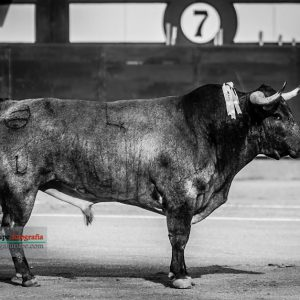 gahirupe_asturdero_saltillo_madrid_2018- (1)