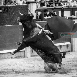 gahirupe_alcurrucen_primera_madrid_2019- (3)