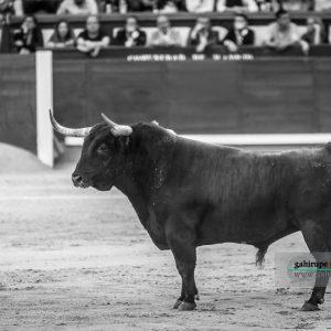gahirupe_alcurrucen_primera_madrid_2019- (4)
